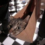 to let the cat out of the bag