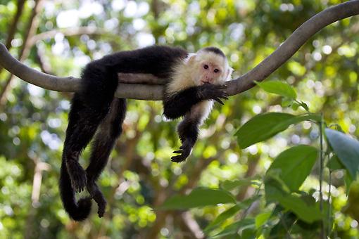 cada macaco no seu galho