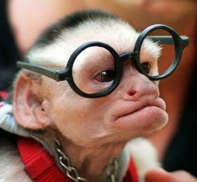 macaco velho