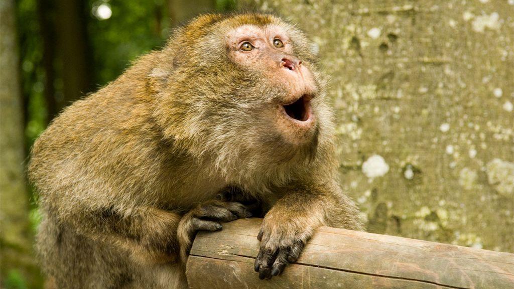 monkey-1.jpg